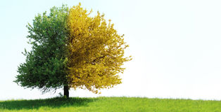 Free Tree On Green Field Stock Photography - 20579502