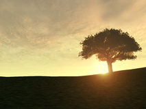Free Tree On Hill Royalty Free Stock Images - 5032349