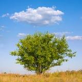 Tree On Meadow Royalty Free Stock Photo
