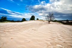 Tree On Sand Dune And Blue Sky Stock Photography