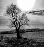 Tree. One tree in the field Stock Photography