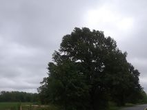 A large tree in the open field. A tree in the open field during a cloudy day royalty free stock photos