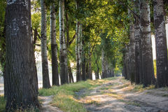 Tree open road Royalty Free Stock Photos