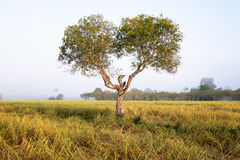 Tree in the open savanna plains Royalty Free Stock Photography