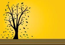 Tree with orange background Stock Image