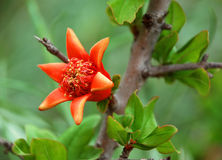 A tree with orange blossom Royalty Free Stock Image