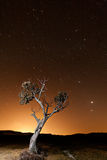 Tree during an orange dusk. Night shot of a tree during an orange dusk, with a sky full of stars and the conjunction of Venus and Jupiter Royalty Free Stock Images