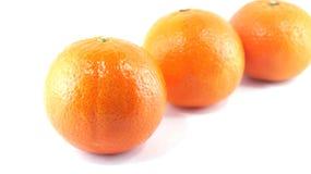 Tree orange isolated Royalty Free Stock Image