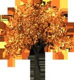 Tree, Orange, Leaf, Plant Royalty Free Stock Photo