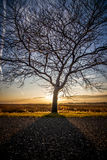 The Tree Royalty Free Stock Images
