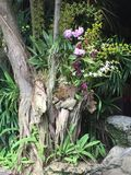 Tree with orchids growing in it royalty free stock photo