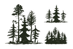 Tree outdoor travel black silhouette coniferous natural badge, tops pine spruce branch cedar and plant leaf abstract Stock Images