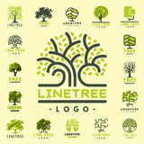 Tree outdoor travel green silhouette forest badge coniferous natural badge tops line spruce vector. Stock Image