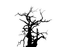 Tree outline. Dead Tree Royalty Free Stock Photo