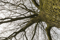 Tree outline with branches Stock Image