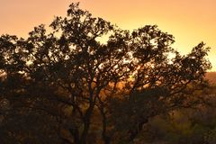 Tree outline at sunset Algarve Portugal stock photography