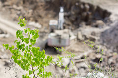 Tree over basalt quarry with excavator. Ecology concept Royalty Free Stock Photo