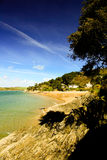 Tree over the beach on the shore at Salcombe Stock Photos