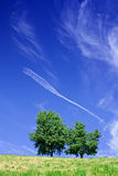 Tree over blue sky Royalty Free Stock Images