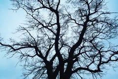 Tree over blue sky royalty free stock photo