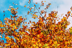 Tree over blue sky Royalty Free Stock Photos