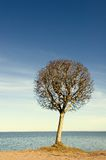 Tree over blue sky background Stock Image
