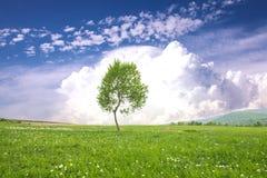 Tree over blue sky stock image