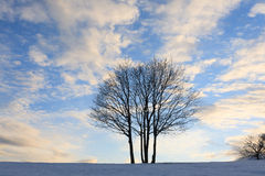 tree over blue sky. Winter panorama Royalty Free Stock Photo
