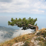 Tree over the clouds Royalty Free Stock Photos