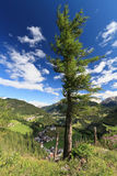 Tree over Cordevole valley Royalty Free Stock Images