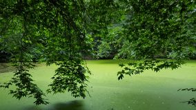 Tree over a green lake Stock Photos