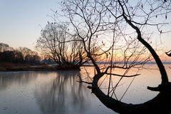 Tree over ice. The tree branches inclines over ice Stock Photos