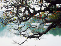 tree over a lake Royalty Free Stock Images