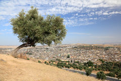 Tree over the old medina of Fes Royalty Free Stock Photography