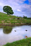 Tree over peaceful Wharfedale Royalty Free Stock Photos