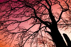 Tree over red sky. Tree silhouette over red dramatic sky royalty free stock photography