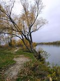 Tree over the river, lake, autumn stock photography