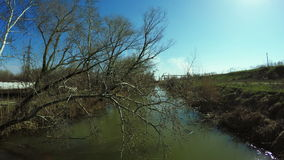 Tree over river. Spring tree over small river stock video footage