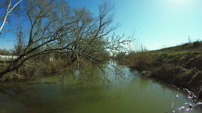 Tree over river stock footage
