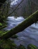 Tree over River Stock Photos