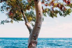 Tree Over The Sea Stock Photo