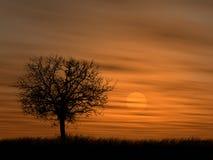 Tree over setting sun. Black tree over setting sun Royalty Free Stock Photos
