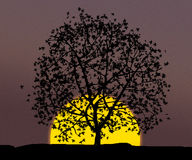 Tree over sunset Royalty Free Stock Photos