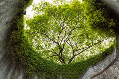The tree over tunnel walkway at Fort Canning Park and Penang roa Stock Image