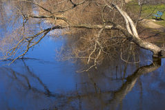 Tree over the water. An old tree reaching out over the surface of the river is reflected in the deep blue of the water Royalty Free Stock Photo