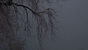 Tree over the water. Movie on the embankment of the river. Tree over the water stock footage