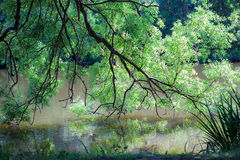 Tree over water with reflection. Summer nature foliage image Stock Photography