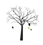 Tree over white background Royalty Free Stock Image