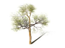 A tree over white background vector illustration