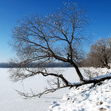 Tree over the winter lake Royalty Free Stock Photos